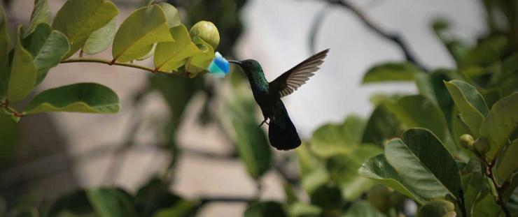 Learn Dart before you Flutter – Creative Bracket
